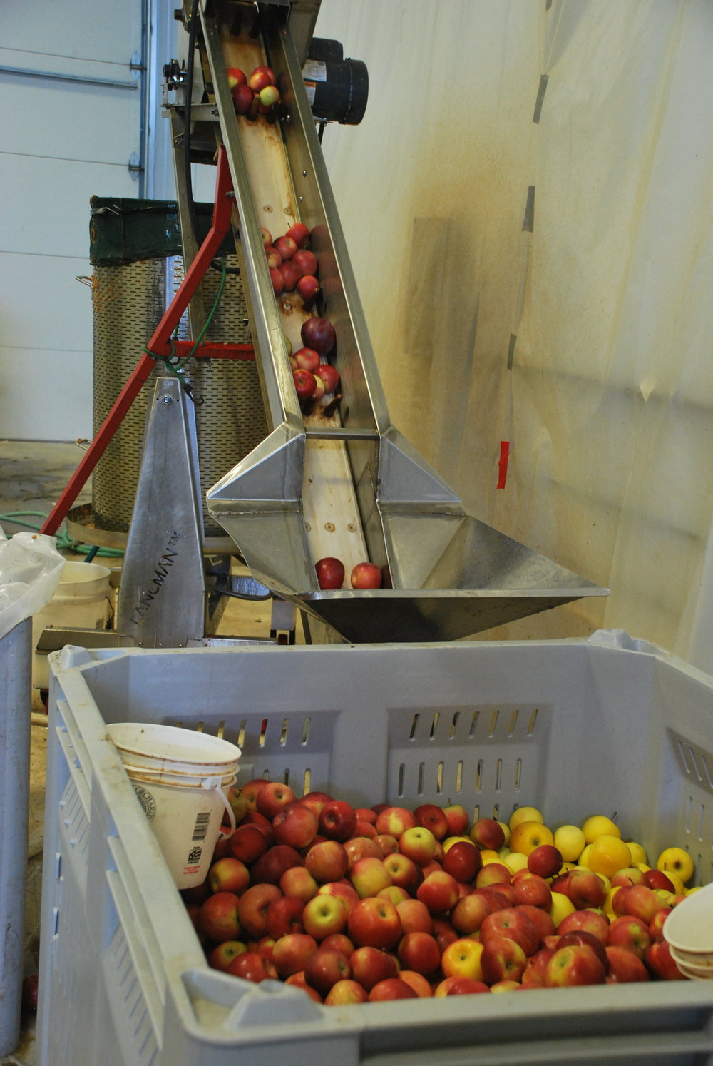 Above: Apples going up the elevator
