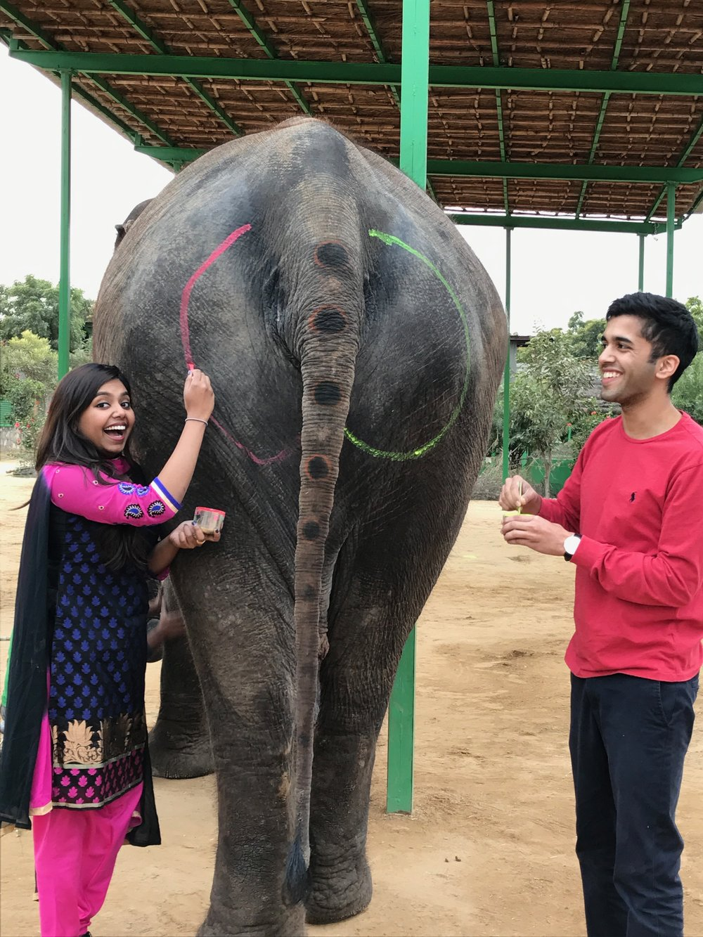 Elephant Village - Jaipur   meet chanda, a beautiful 28 year old indian elephant from Jaipur. jeffrey and I spent quite some time with her. we first got to know her by petting her and showering her with hugs and kisses! we fed her bamboo, painted her nails and butt (lol), went on a very relaxing 15-20 minute ride, and wrapped up our elephant experience by giving her some water to drink.   You might be wondering why we painted Chanda's butt. When i was a little girl, I asked daddy how he learned to paint. like any girl would, i believed him when he told me the first time he painted was on an elephant's butt. 23 years later, i came to realize he was joking! And with that, this picture was taken in honor of me believing his story (all these years).
