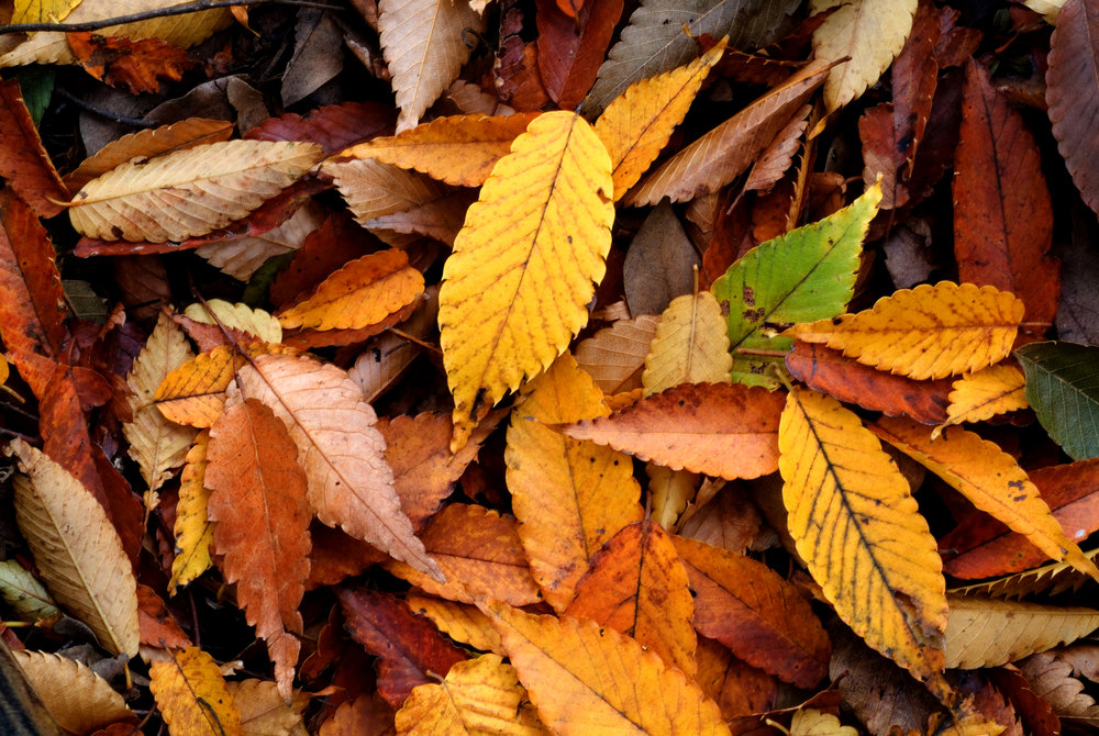 Shifting With The Seasons: Autumn