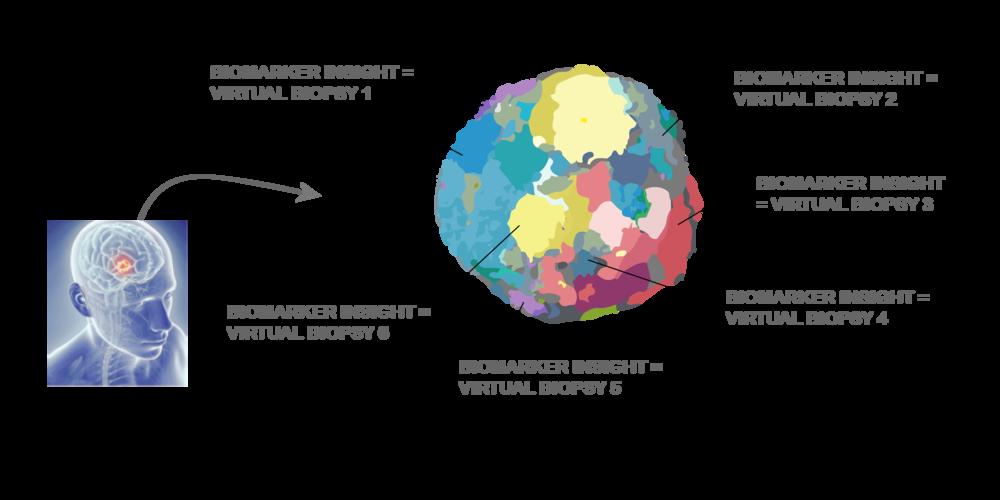 virtual_biopsy.png