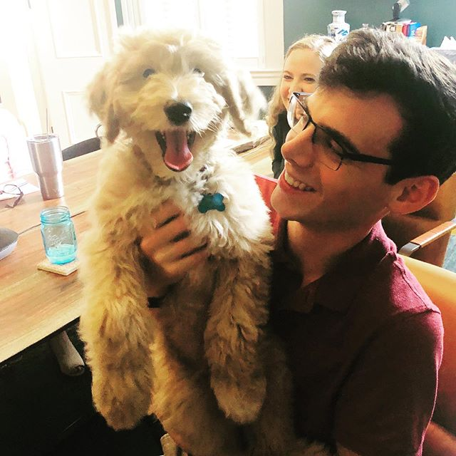 Introducing Woody. Our financial therapy doggie. Available for appointments by request only. ❤️ #financialplanning #thegreenhouse #goldendoodlesofinstagram