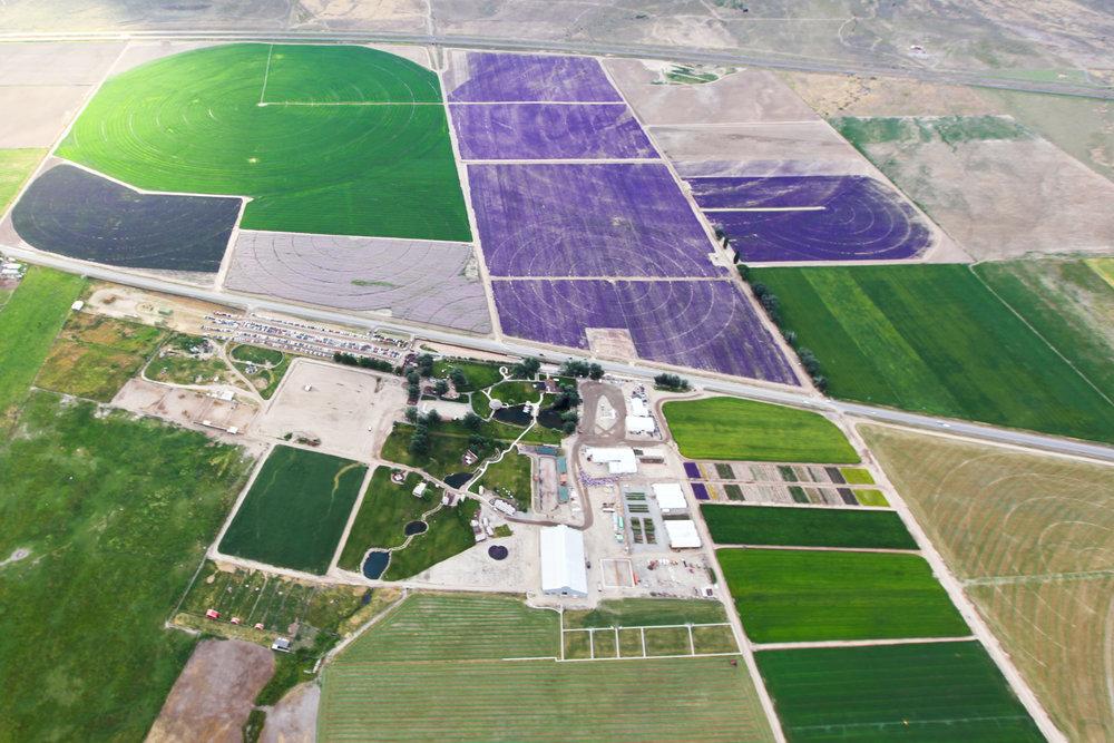 Young Living Farm, Lehi, Utah