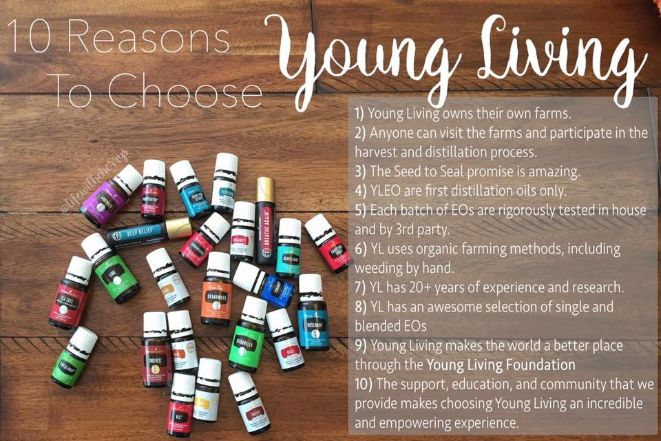 10 Reasons to choose YL