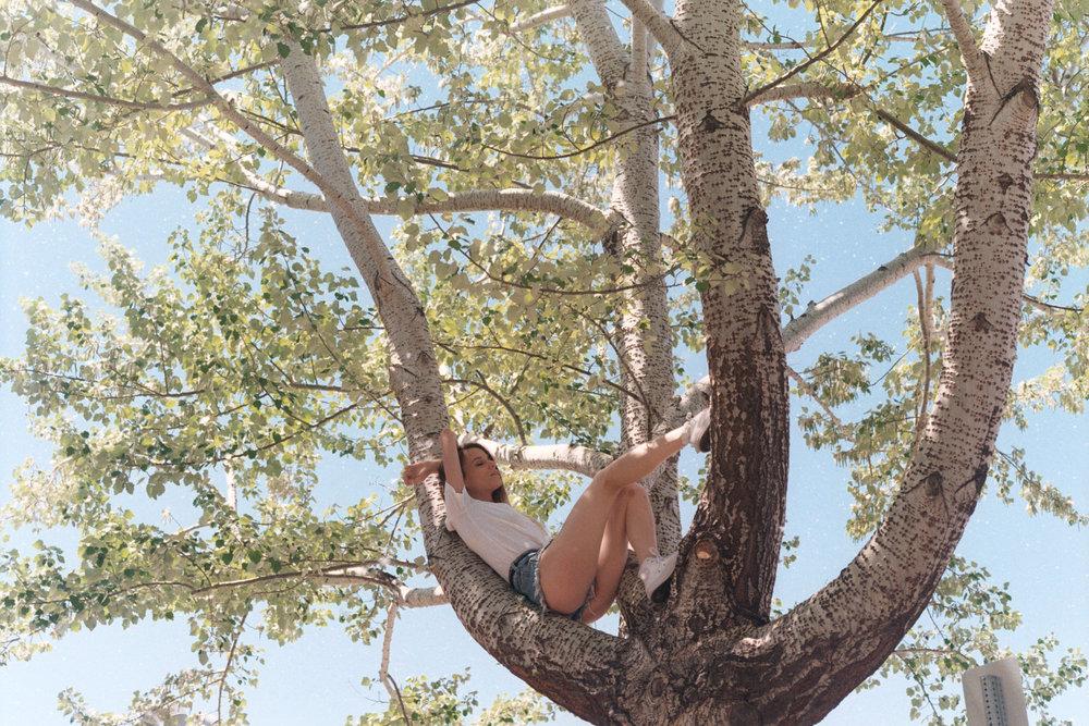 COTTONWOOD TREE -