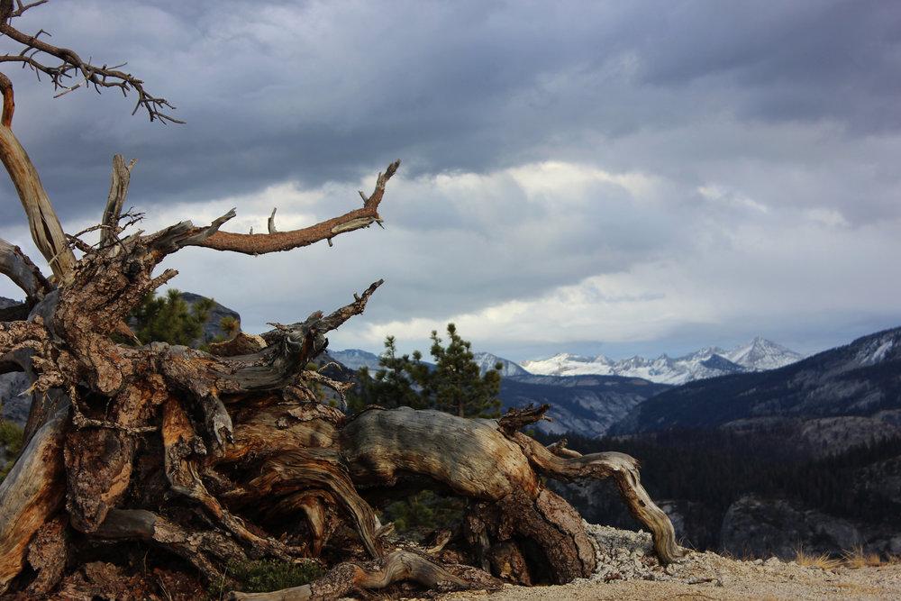 Photo_Yosemite 4.jpg