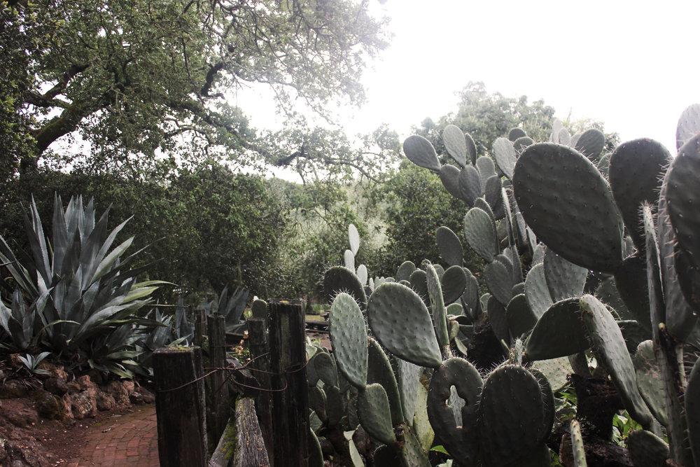 Photo_Cactus 1.jpg