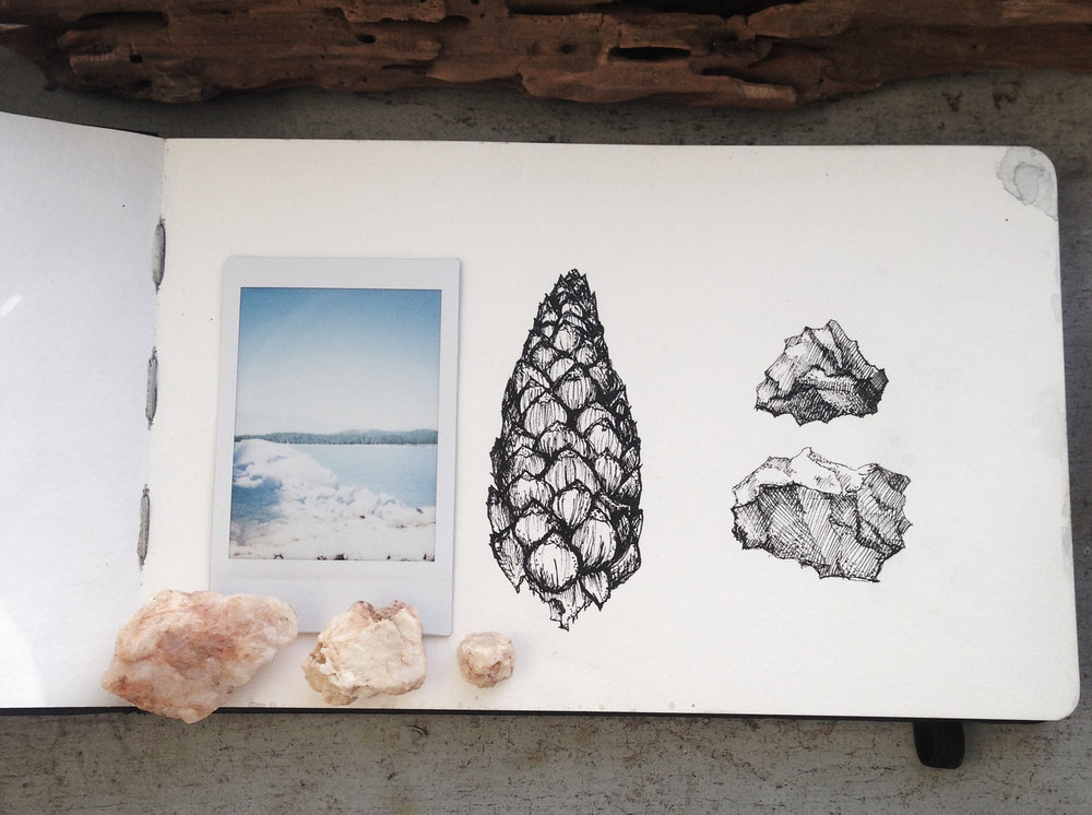sketchbook page pinecone.jpg
