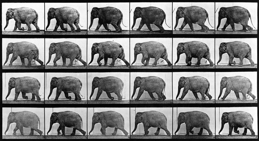 muybridge_elephant.jpg