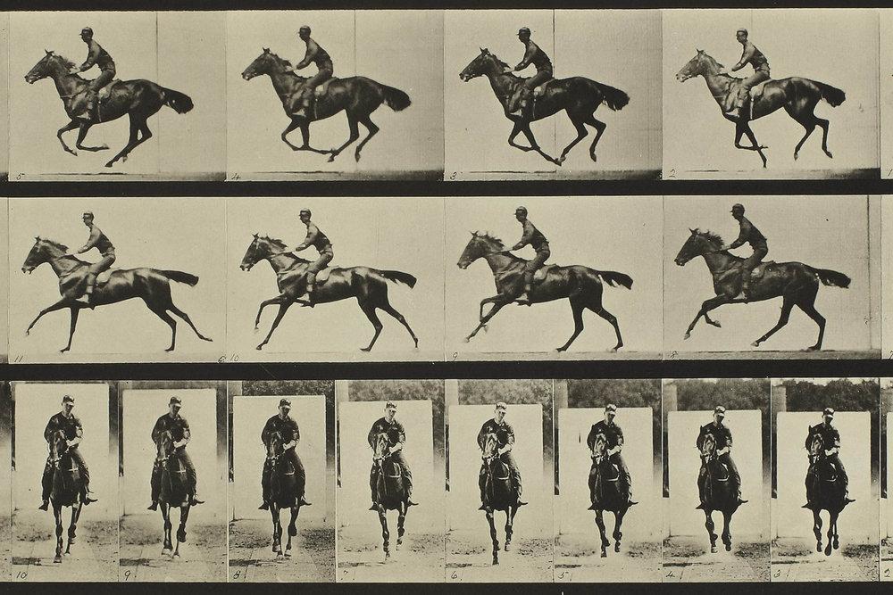 muybridge_horse.jpg
