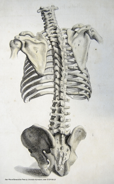 Back Anatomy — Got Your Back, Tacoma