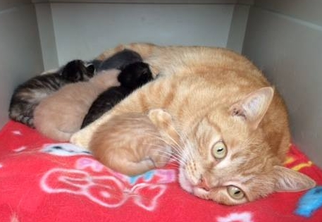 Your female cat does NOT want to help you or your kids experience the miracle of birth.