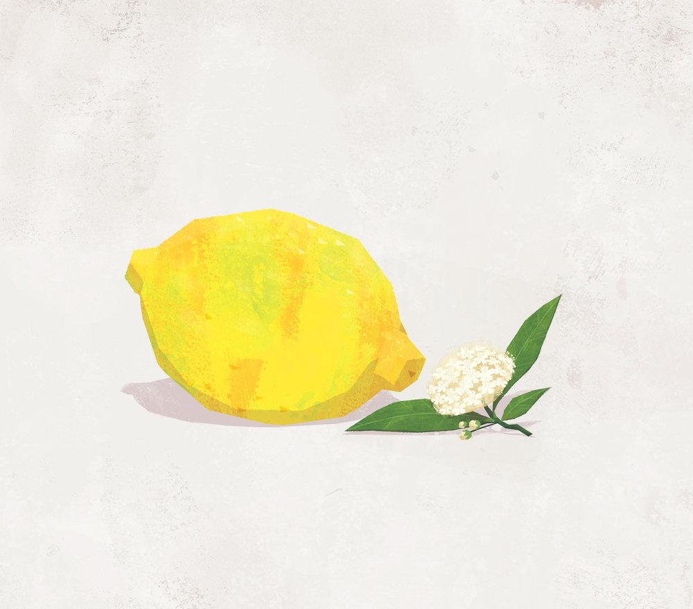Lemon & Lemon Myrtle