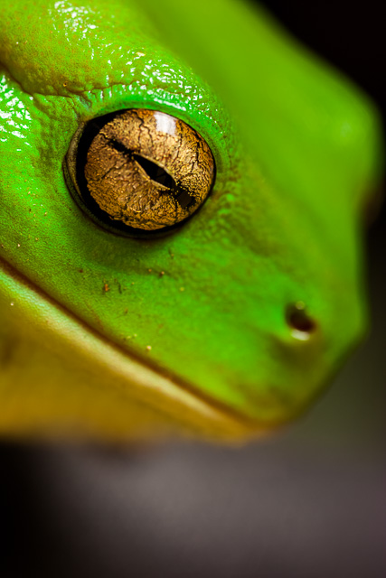 2014-International-Loupe-Awards-bronze-open-science-nature-category-Contentment.jpg