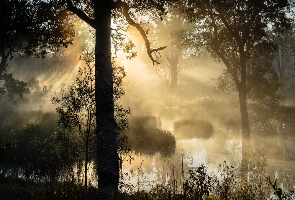 Foggy morning by Lake Wyaralong
