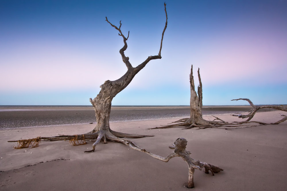 Surreal landscape featuring dead trees on a beach with the tide