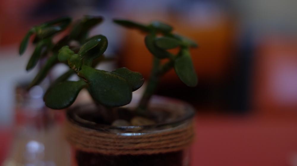 succulent.jpeg