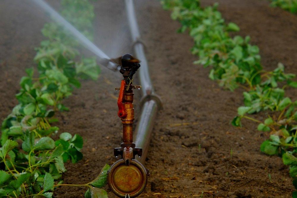 water-sprinklers-880965_1920-mod.jpg