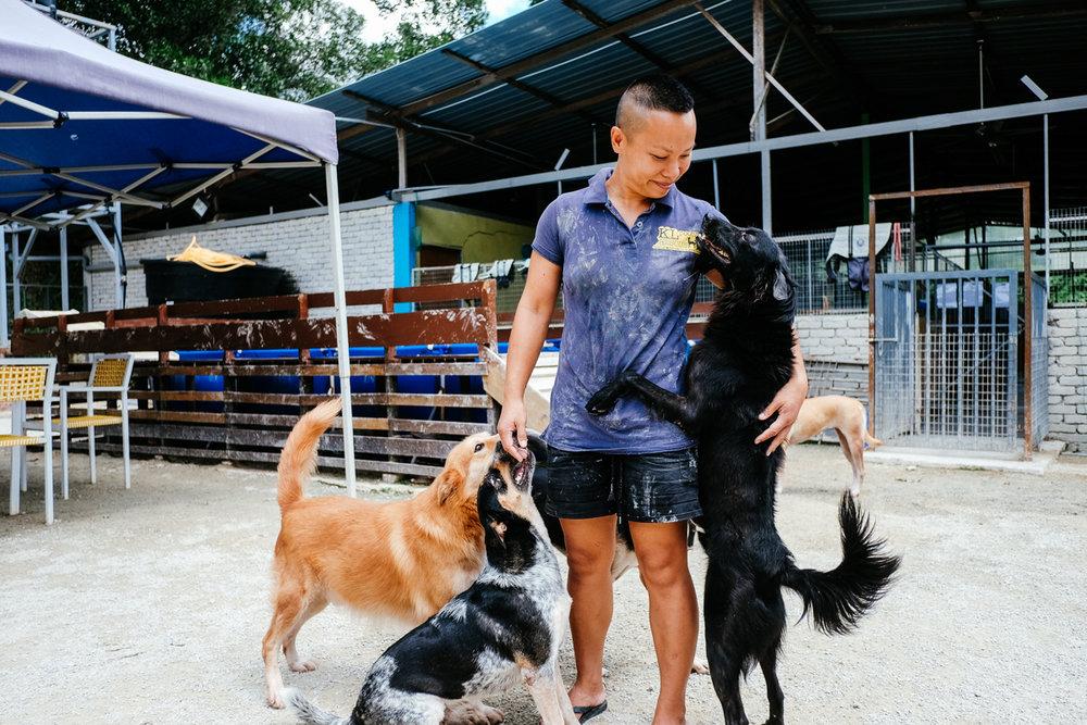 PassionPortraits Pooch Rescue