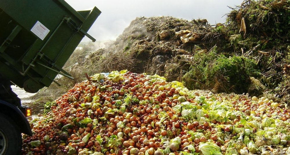 1/3 of food produced for humans is wasted/dumped -
