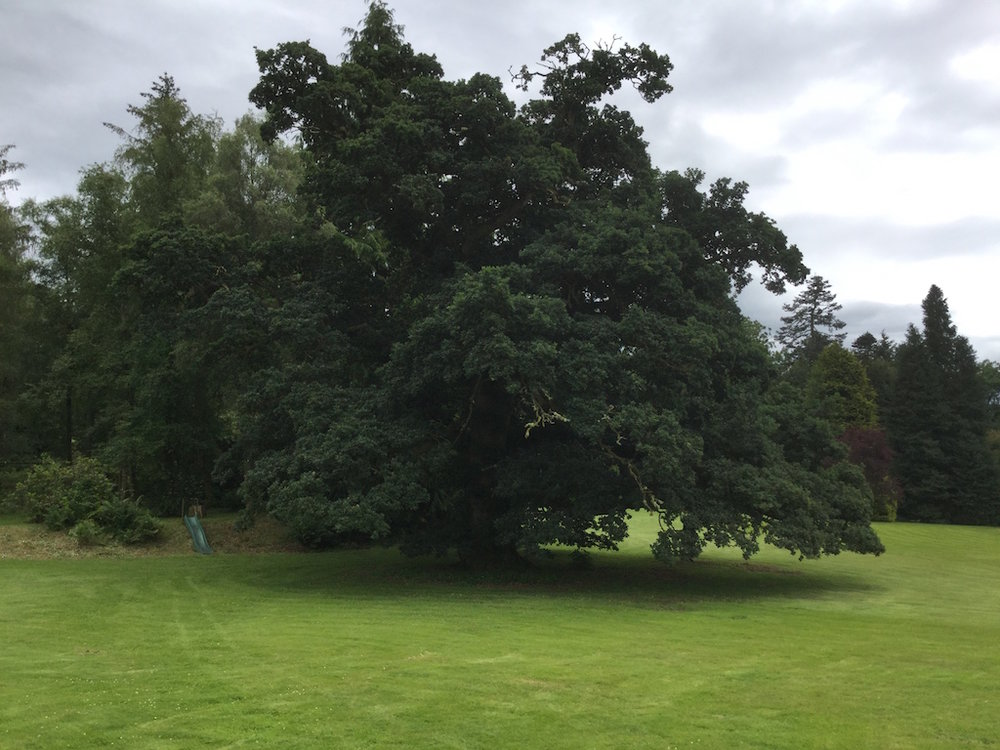 tree consultancy fife