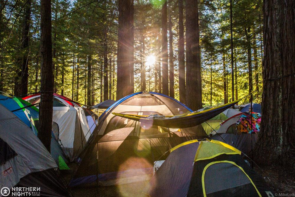 redwood-grove-camping-festival.jpg