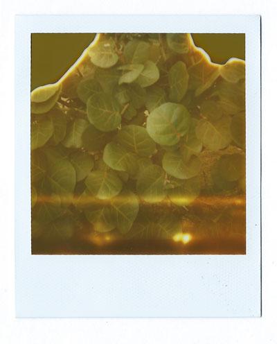 04-seagate-seagrapes-web.jpg