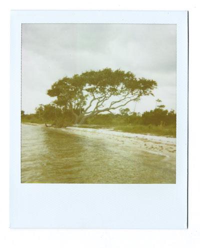 17-pensacola-tree-web.jpg