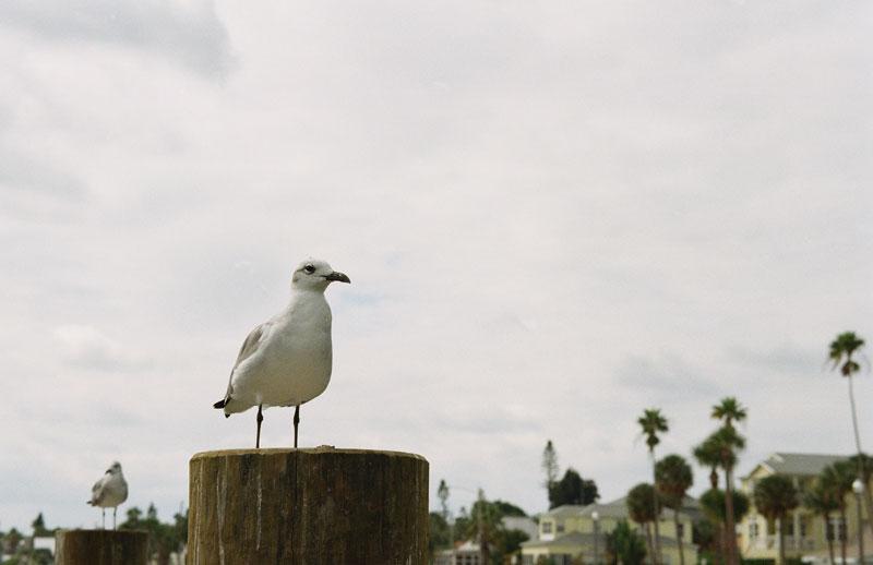 03-PAG-Seagull.jpg
