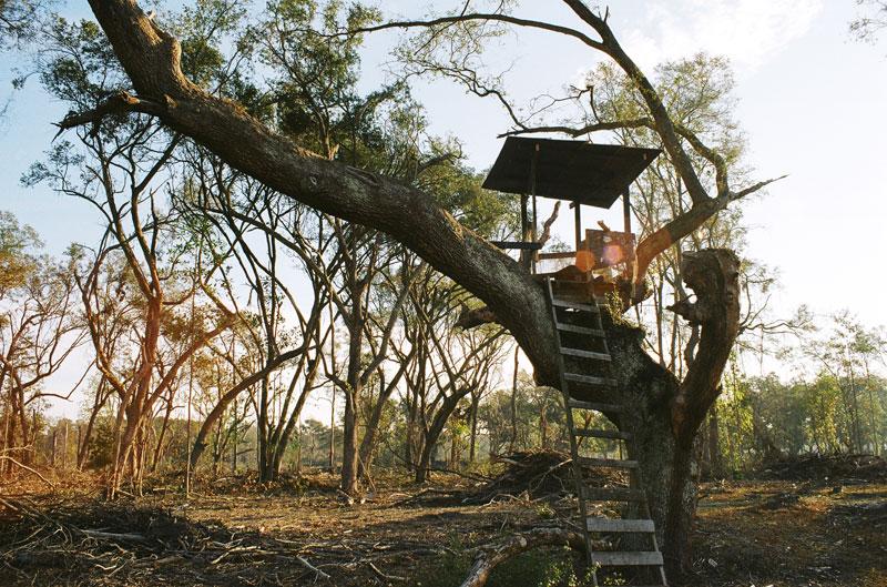 08-Treehouse.jpg