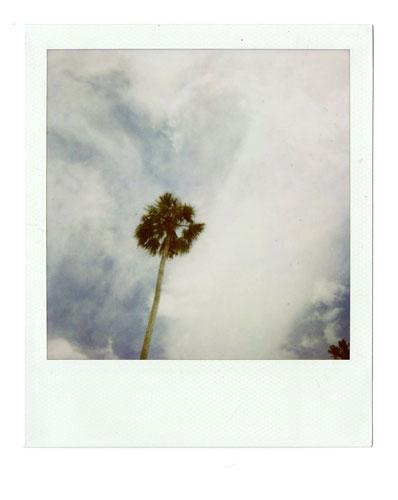 08-PalmTree.jpg