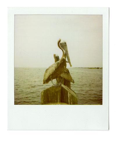22-Pelicans.jpg