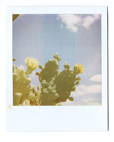 04-cacti02-web.jpg