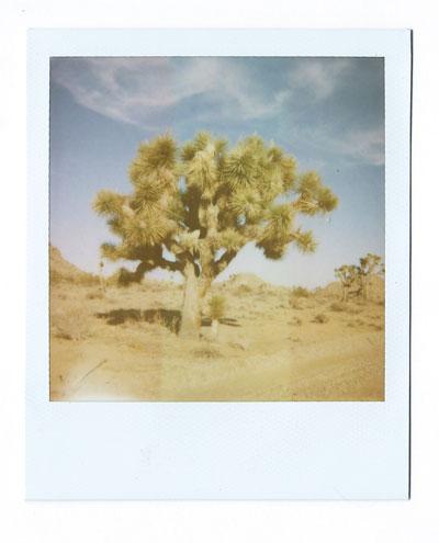13-jtnp-tree-web.jpg