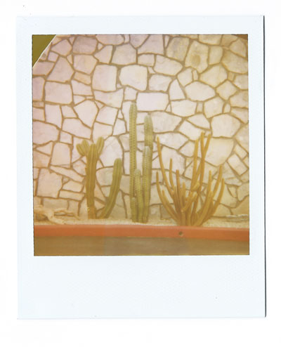 17-palmsprings-cacti-web.jpg