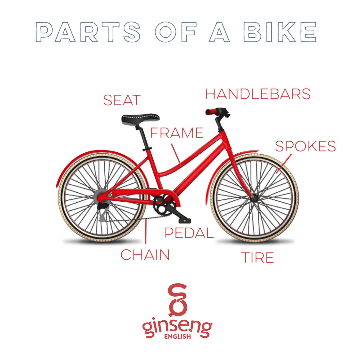 Parts Of A Bike Ginseng English Learn English