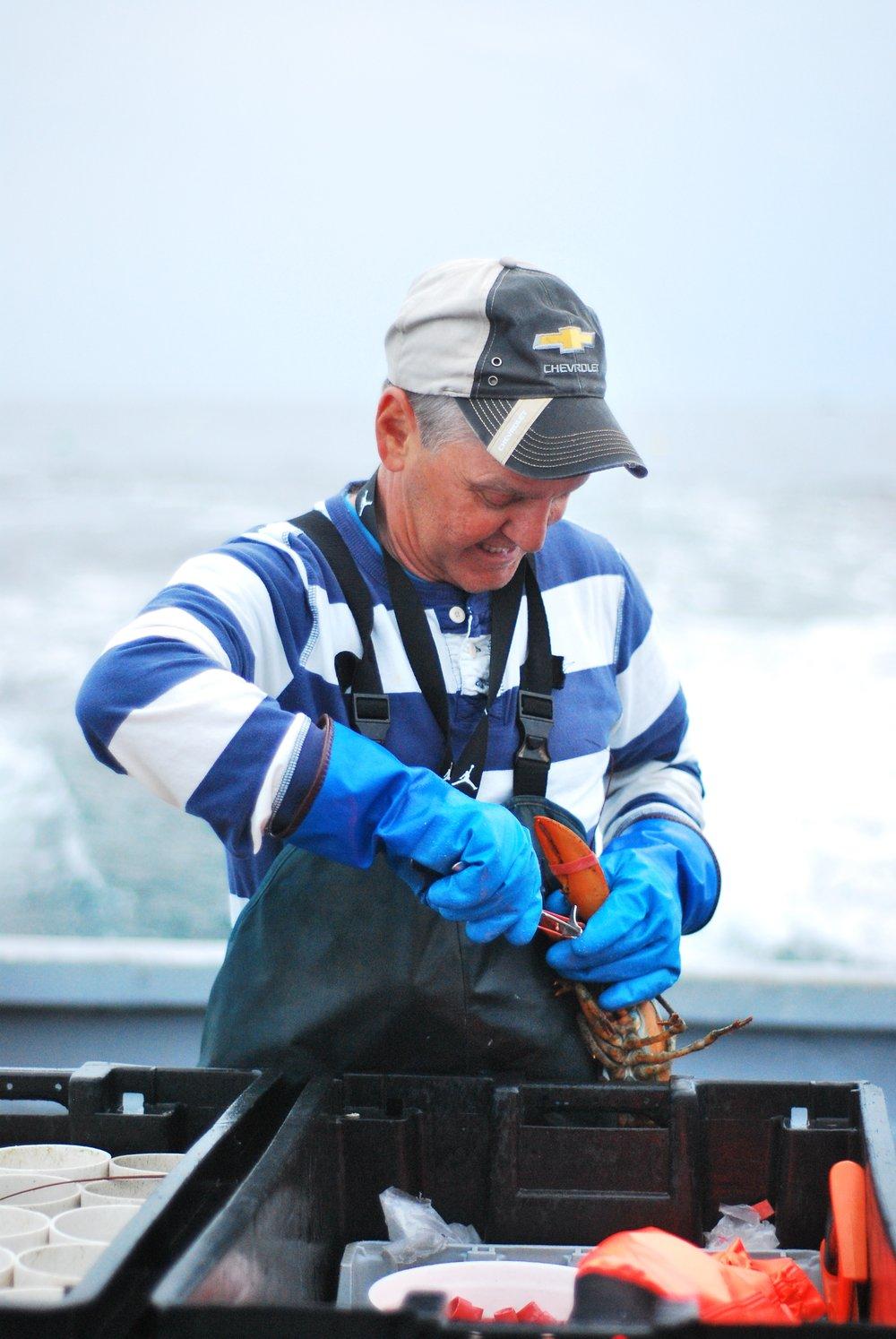 你还没吃过新鲜的新英格兰龙虾呢!