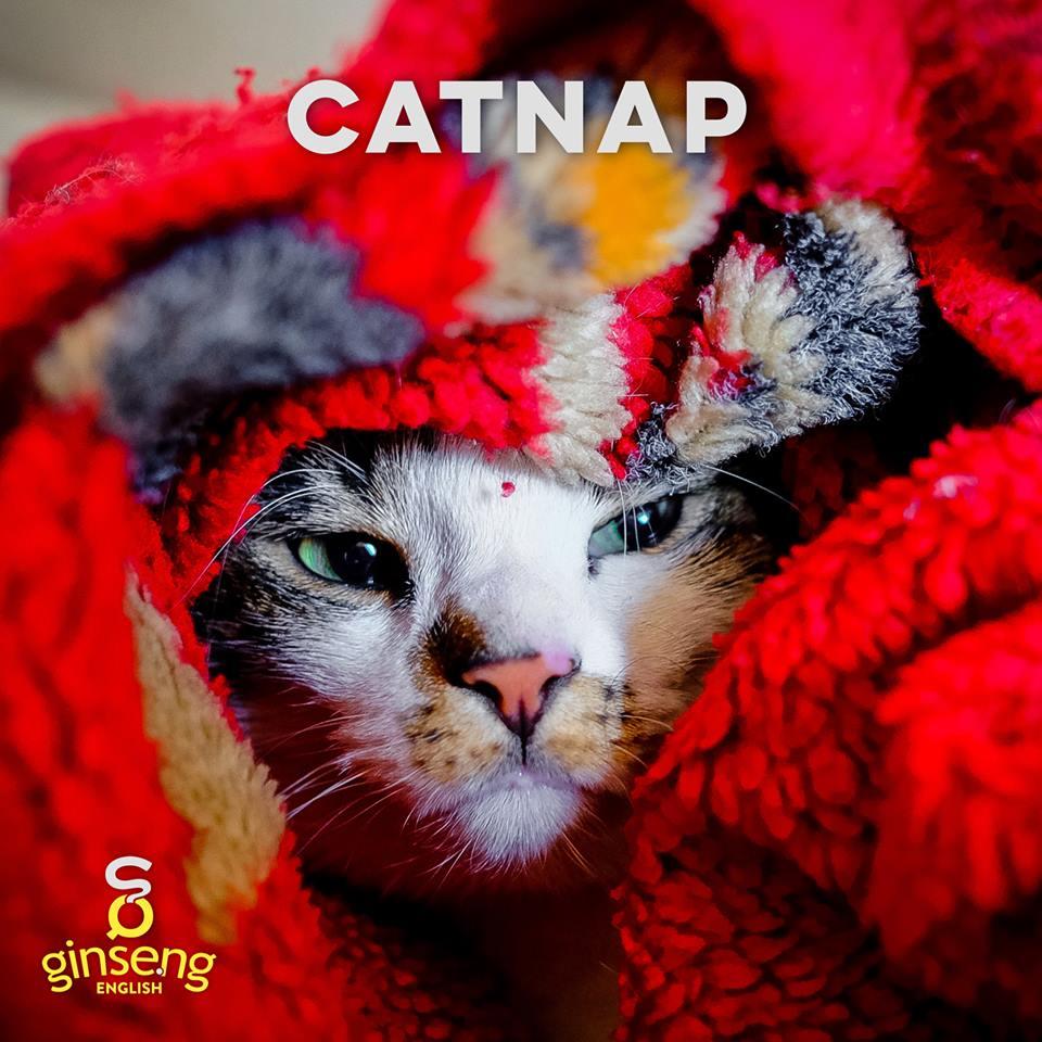 catnap.jpg