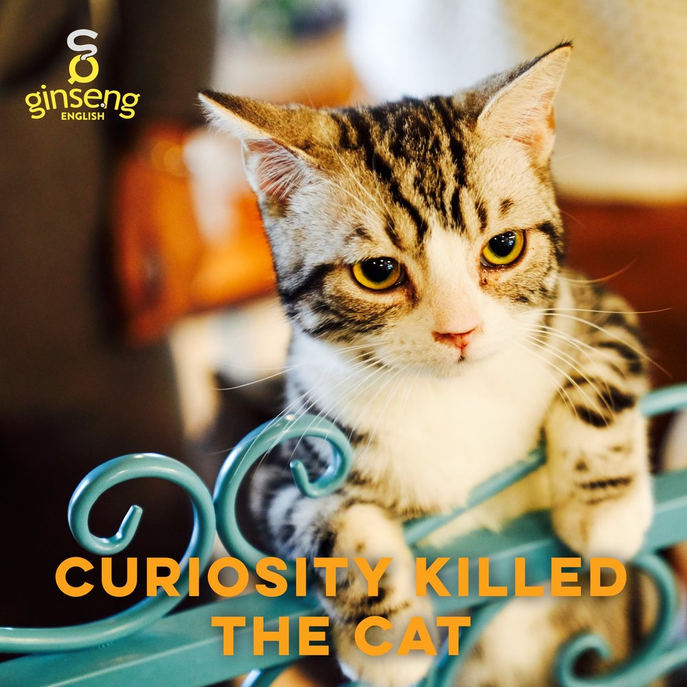 Curiosity Killed the Cat Idiom