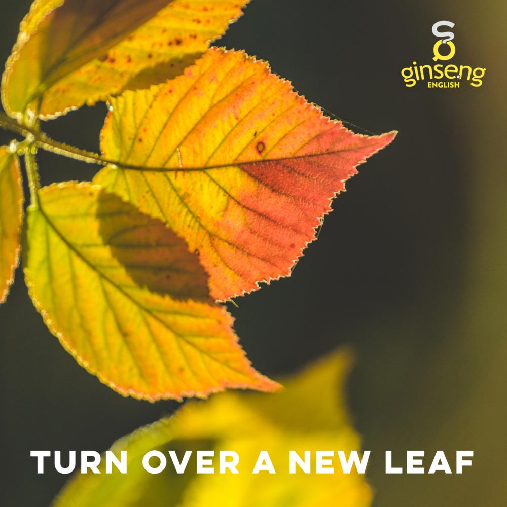 turn over new leaf.PNG