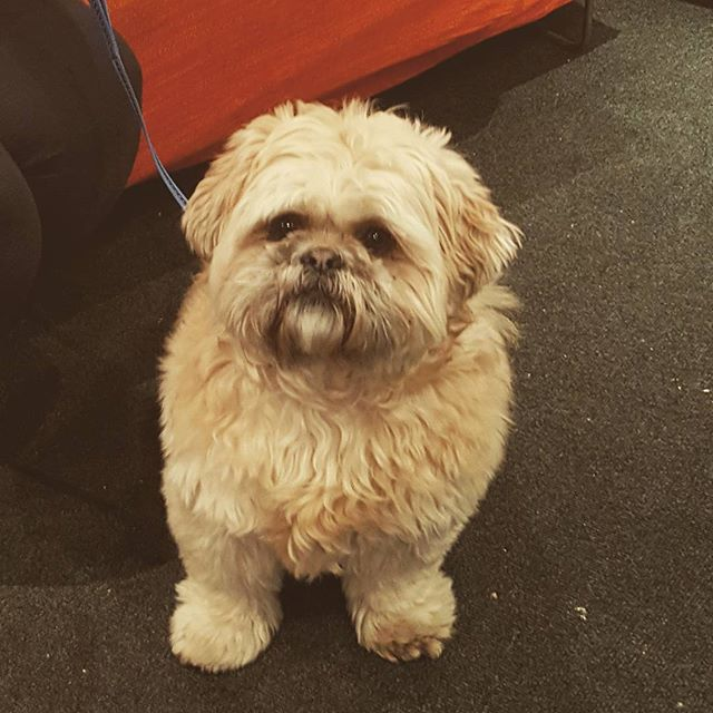 Buster the Ewok dog keeping us company at the weekend. #drumstarsuk #drumshopuk #ewokdog #dogsofinstagram