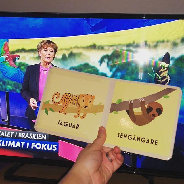"""Blev väldigt ledsen när jag hade Embla i knät b och såg pekboken """"Vilda djur i regnskogen"""" ligga på soffbordet samtidigt som Aktuellt rapporterar om den troliga vinnaren i det kommande presidentvalet i Brasilien som vill skövla Amazonas (och dessutom är fascist på riktigt). Ska hon växa upp i en värld utan jaguarer, tapirer, sengångare och rosa floddelfiner? 😥"""