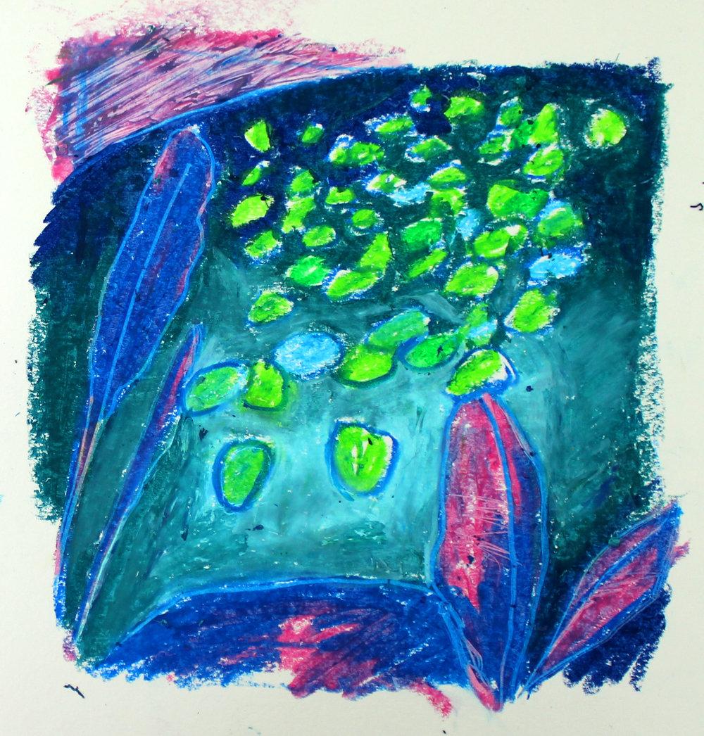Waterlillies 2017