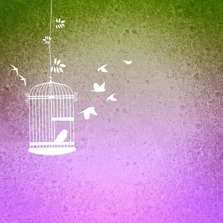 bird-cage-680027_960_720 (1).jpg