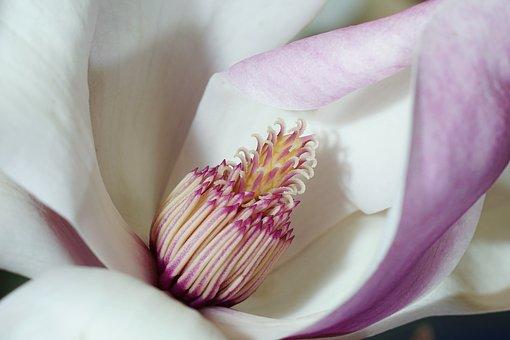 flower-3125753__340 (1).jpg
