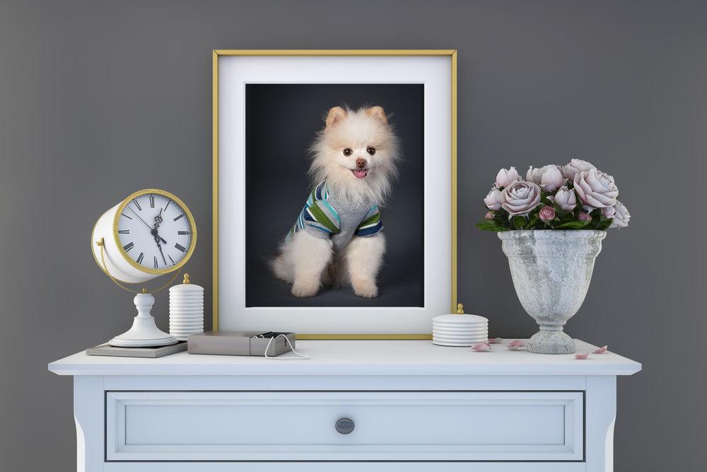 Pomeranian_Vancouver_Pet_Photography.jpg
