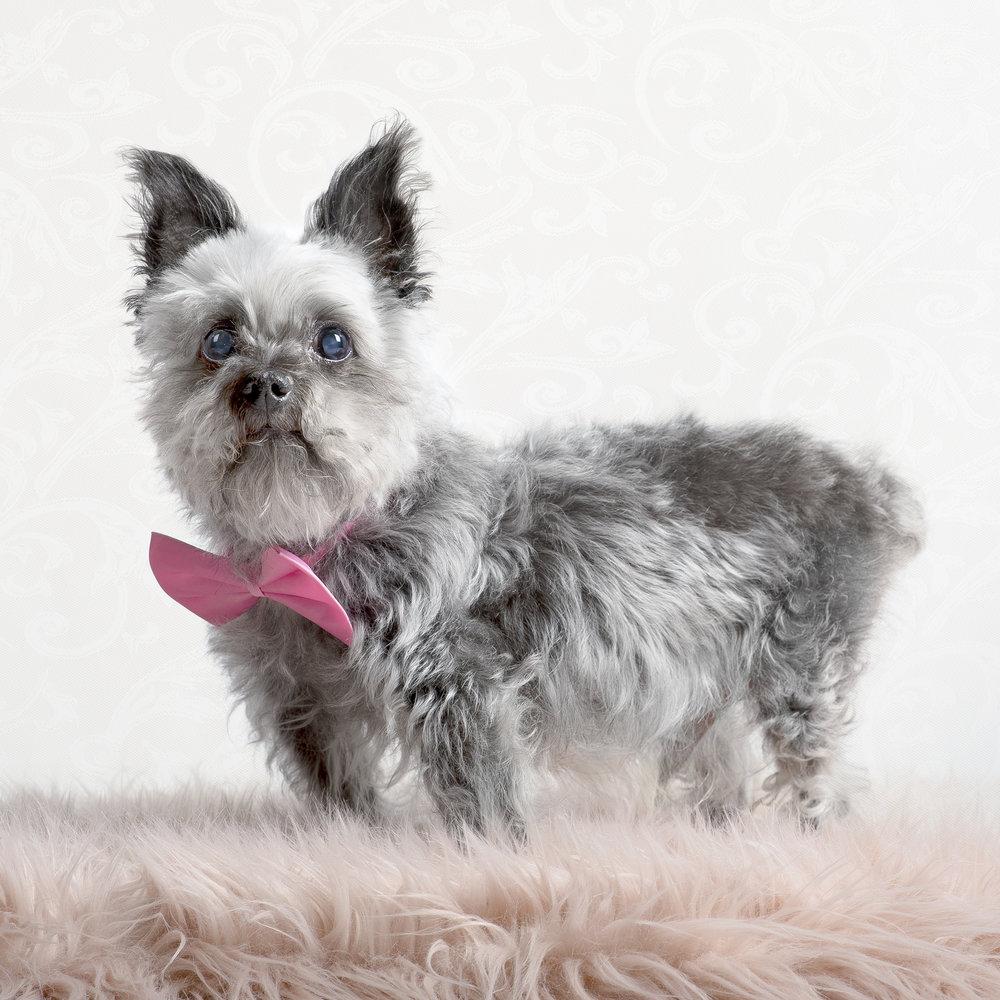 remembrance-dog-PHOTO-SESSION.jpg