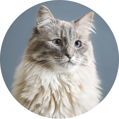 Cat_Vancouver_pet_photography.jpg