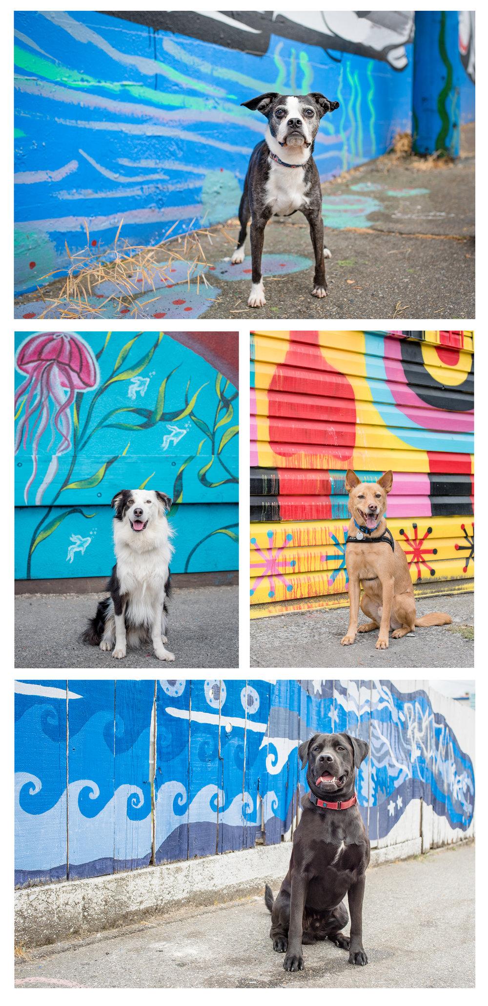 Dog_Photos_Vancouver_Mural_Festival.jpg