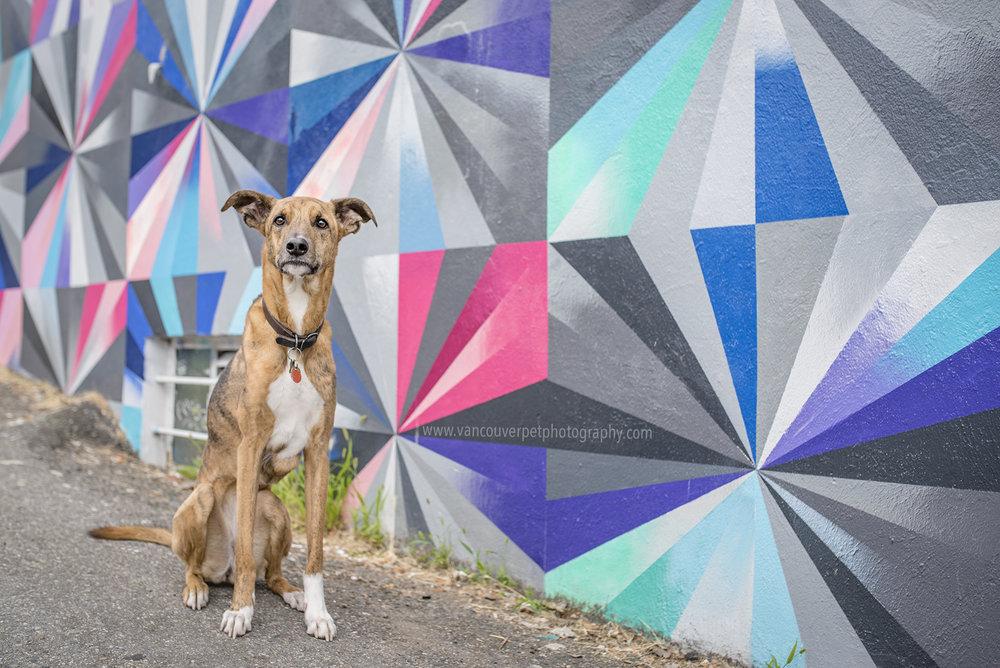 Dog_Photo_Vancouver_Mural_Festival-2.jpg
