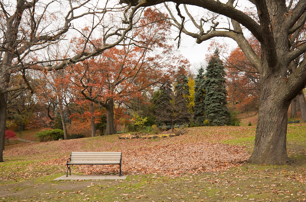 a park during fall